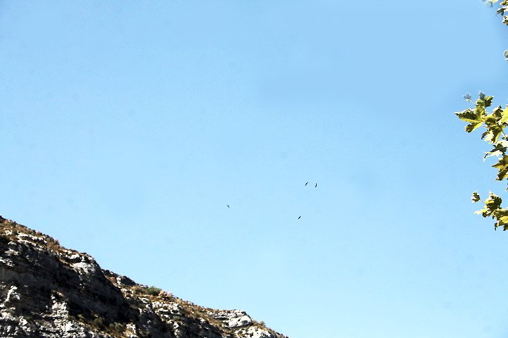 IMG_5515Vultures1small.jpg
